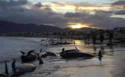 <p>Le balene spiaggiate a Kommetji, vicino a Città del Capo. REUTERS/Chad Chapman</p>