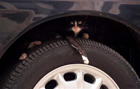 A pet cat finds shelter on the wheel of a car which was temporarily abandoned by it owner in Karachi August 29, 1998. REUTERS/Stringer