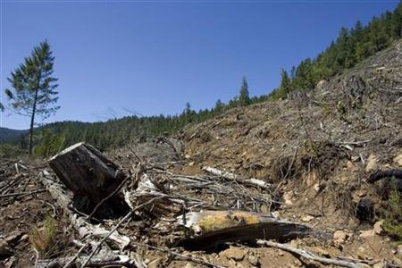 Logging debris covers an area that was clear cut by a timber company on private land in the Umpqua National Forest near Drain, Oregon May 15, 2008. REUTERS/Richard Clement