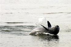 <p>Un delfino del Mekong. REUTERS/Chor Sokunthea (CAMBODIA)</p>