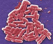 <p>E. coli bacteria is seen in an undated microscopic image courtesy of the CDC. REUTERS/Handout</p>