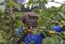 <p>A farmer prunes her coffee bushes at a plantation in Kiambu district, May 28, 2008. REUTERS/Noor Khamis</p>