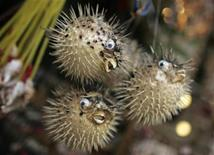 <p>Souvenirs shaped like puffer fish are displayed in a shop at Tai O, a fishing village in the western part of Lantau island that is also known as the Venice of Hong Kong, January 6, 2008. REUTERS/Victor Fraile</p>