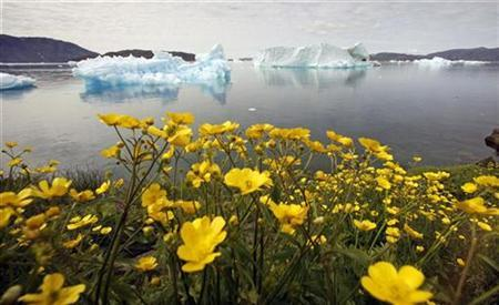 Wildflowers bloom on a hill overlooking a fjord filled with icebergs near the south Greenland town of Narsaq July 27, 2009. REUTERS/Bob Strong
