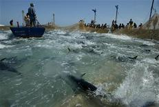 <p>Pescatori siciliani. REUTERS/Tony Gentile</p>