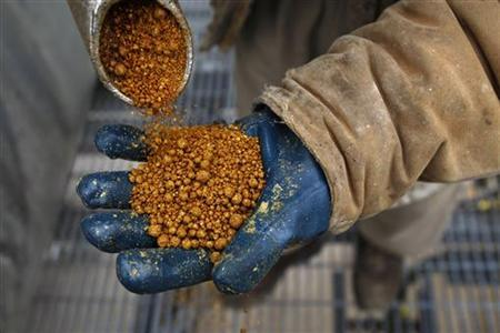 A process operator holds a handful of dried distillers grains, a protein animal feed that can be fed to livestock, at the GreenField Ethanol plant in Chatham, Ontario, April 10, 2008. REUTERS/Mark Blinch