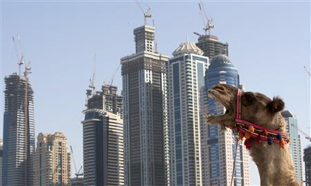 A camel yawns on Jumeirah's popular tourist beach in front of tower blocks in Dubai, November 28, 2009. World leaders expressed confidence in the global economic recovery Friday despite fears about a debt default by Gulf emirate Dubai, while major banks played down their exposure to the debt. REUTERS/Steve Crisp