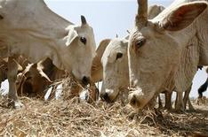 <p>Bestiame a un pascolo a 50 km da Nairobi, capitale del Kenya. Foto d'archivio. REUTERS/Thomas Mukoya</p>