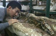 """<p>El profesor Xu Xing de la Academia China de Ciencias inspecciona un nuevo fósil de un dinosaurio carnívoro llamado """"Haplocheirus sollers"""", en un taller en las afueras de Pekín, 26 ene 2010. China desenterró el fósil de un dinosaurio carnívoro de dos patas que vivió hace 160 millones de años y que investigadores identificaron como uno de los primeros miembros conocidos de un largo linaje que incluye pájaros. El """"Haplocheirus sollers"""" tenía un cráneo largo y estrecho, varios dientes pequeños, bíceps y extremidades anteriores poderosas, que le permitían cazar lagartos primitivos, mamíferos y reptiles pequeños, escribieron los expertos en la última edición de la revista Science. REUTERS/Barry Huang</p>"""