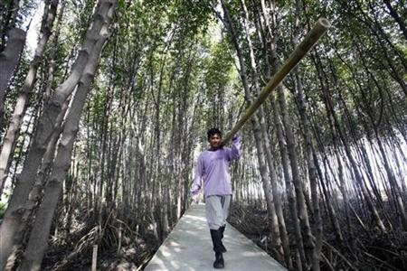A worker carries a bamboo stick to be planted along the coastal line in a mangrove plantation at the Kok kham district in Samutsakorn province October 3, 2009. REUTERS/Sukree Sukplang