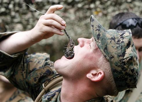 Scorpions, frogs, lizards: A military diet