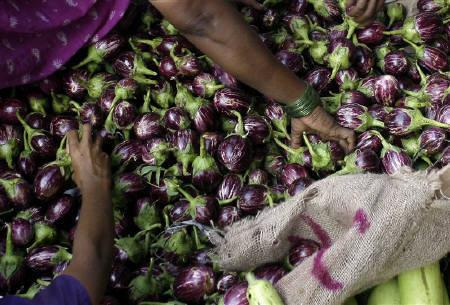 Customers purchase brinjals at a wholesale vegetable market in Mumbai July 14, 2008. India has postponed the launch of its first genetically modified (GM) vegetable, saying it would adopt a cautious approach and wait for more scientific studies on the impact of the new variety of eggplant. REUTERS/Punit Paranjpe/Files
