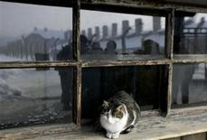 <p>A cat rests on a windowsill next to the gate of the former Nazi camp of Auschwitz in Oswiecim January 27, 2010. REUTERS/Kacper Pempel</p>