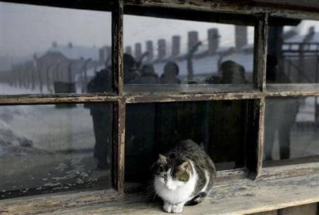 A cat rests on a windowsill next to the gate of the former Nazi camp of Auschwitz in Oswiecim January 27, 2010. REUTERS/Kacper Pempel