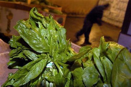 Bundled spinach is pictured in a cooler at a wholesale farmer's market in Washington September 15, 2006. U.S. supermarkets cleared shelves of bagged fresh spinach after the Food and Drug Administration warned the produce could be the source of a deadly E. coli outbreak across the nation. REUTERS/Jonathan Ernst