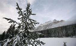 <p>A snow-covered tree and a misty mountain are seen in Canada's Banff National Park near Lake Louise, Alberta in this December 3, 2006 file photo. REUTERS/Andy Clark</p>