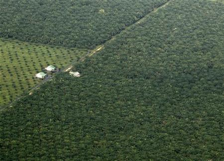Aerial view of a palm oil plantation in Pelalawan, Indonesia's Riau province November 9, 2009. REUTERS/Beawiharta