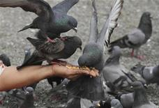 <p>A woman feeds pigeons in Sanam Luang park which lies between the Grand Palace and the Emerald temple in Bangkok January 30, 2010. REUTERS/Sukree Sukplang</p>