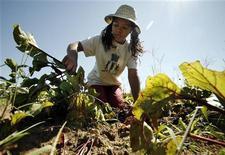 <p>Ragazza di Boston lavora nell'orto, foto d'archivio. REUTERS/Brian Snyder</p>