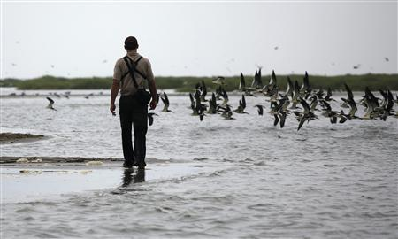 A member of the U.S. Fish & Wildlife Service during a search for any oil damage on wildlife in Breton Island, Louisiana, May 3, 2010. REUTERS/Carlos Barria