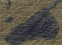 <p>Chiazze di petrolio al largo delle coste del Mississippi. REUTERS/Brian Snyder</p>