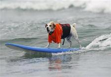 <p>Imagen de archivo de Buddy, un perro jack russell terrier, participando de la competencia anual de surf para perros Dog Surf-A-Thon, California. Sep 7 2008. La temporada de surf ha comenzado, y Buddy, un Jack Russell terrier, está preparado. REUTERS/Mike Blake /ARCHIVO</p>
