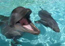 <p>Immagine d'archivio di delfini in un parco marino alle Hawaii. REUTERS/Lucy Pemoni LP</p>