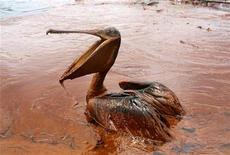 <p>Los esfuerzos por contener el derrame de un pozo petrolero submarino en el Golfo de México empezaron a dar resultados, dijeron el sábado autoridades estadounidenses, mientras que el presidente Barack Obama salió a defender su manejo de la crisis medioambiental. Un pelicano totalmente cubierto con petroleo se posa en un charco de crudo en la costa de la Queen Bess Island, jun 5, 2010. REUTERS/Sean Gardner</p>