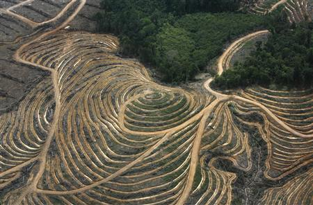An aerial view shows a cleared forest area under development as a palm oil plantation by palm oil companies in the Ketapang district of Indonesia's West Kalimantan province July 5, 2010. The photograph was taken as part of a media trip organised by conservationist group Greenpeace, which has campaigned against palm oil expansion in forested areas in Indonesia. REUTERS/Crack Palinggi