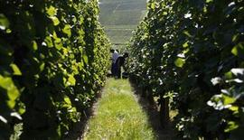 <p>Workers harvest grapes of Pinot Noir in the Alsace region near Colmar, eastern France, August 31, 2009. REUTERS/Vincent Kessler</p>