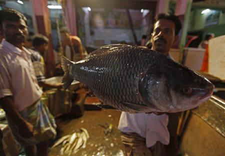 July inflation slows but policy rate seen rising reuters for Wholesale fish market
