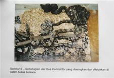 <p>Копия фотографии из суда, на которой запечатлены рептилии, которых гражданин Малайзии пытался вывезти из страны. Гражданин Малайзии получил шесть месяцев тюрьмы, а также обязан выплатить штраф в размере 190.000 ринггитов ($61.000) за попытку контрабандного вывоза из страны более 95 змей. REUTERS/Handout/Sepang Sessions Court</p>