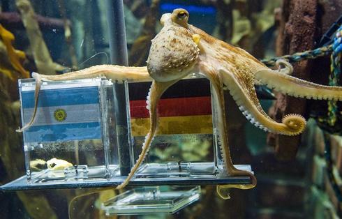 RIP: Paul the Octopus