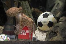 <p>Imagen de archivo del pulpo Paul durante el mundial de fútbol en Oberhausen, Alemania. Ago 20 2010 Paul, el pulpo oráculo que saltó a la fama en el Mundial de Sudáfrica en el verano boreal por sus certeros pronósticos de los resultados de los partidos de fútbol de Alemania y de la final, murió en su casa de Oberhausen a los dos años de edad. REUTERS/Sea Life Centre/Pitch/ARCHIVO</p>
