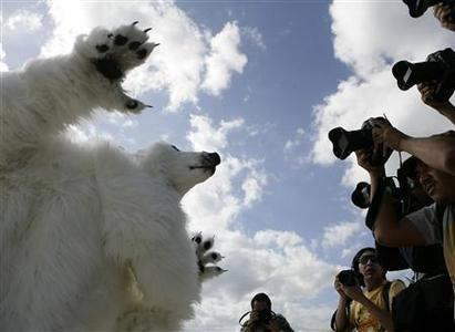 An activist of Sierra Club dressed as a bear reacts to a photographer after a demonstration where they placed their heads in the sand to symbolize that countries are not doing enough to fight climate change at a beach in Cancun December 3, 2010. REUTERS/Gerardo Garcia