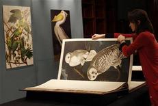 """<p>Служащая аукционного дома Sotheby's показывает книгу """"Птицы Америки"""", Лондон 6 декабря 2010 года. Экземпляр богато иллюстрированного четырехтомника орнитолога Джона Джеймса Одюбона """"Птицы Америки"""" продан за рекордные для печатного фолианта 7,3 миллиона фунтов стерлингов ($11,5 миллиона) на торгах Sotheby's в Лондоне. REUTERS/Suzanne Plunkett</p>"""