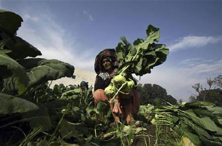 Farmers work in a vegetable field in Jammu January 13, 2011. The government will review import and export of all essential commodities, it said in a statement on Thursday, in its bid to tame spiralling food prices that have fuelled rapid inflation. REUTERS/Mukesh Gupta
