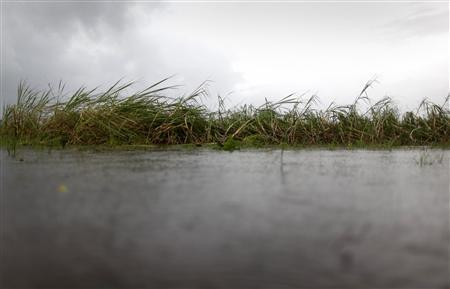 A sugar cane crop, damaged and surrounded by flood water from cyclone Yasi, stands at an angle in a field near the northern Australian town of Innisfail, about 80 km (48 miles) south of Cairns, February 4, 2011. REUTERS/Tim Wimborne