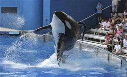 "<p>Tillikum, a killer whale at SeaWorld amusement park, performs during the show ""Believe"" in Orlando, September 3, 2009. REUTERS/Mathieu Belanger/Files</p>"