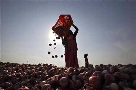 Women labourers work in an onion field in Pimpalgaon, about 215 km (133 miles) north of Mumbai January 23, 2011. REUTERS/Danish Siddiqui