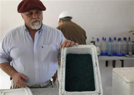 Agronomist Marcelo De Coud shows a type of algae used to make biodiesel at the newly opened Oilfox S.A. Biofuel factory in San Nicolas, northeast Buenos Aires August 22, 2010. REUTERS/Enrique Marcarian