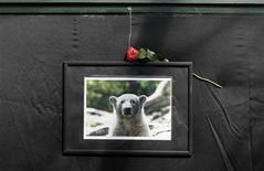 <p>Una fotografía del oso polar Knut en el zoológico de Berlín. mar 21 2011. Knut, el famoso oso polar que murió el pasado fin de semana, podría haber sido víctima de un problema cerebral, dijo el martes el zoológico de la capital alemana. REUTERS/Tobias Schwarz</p>