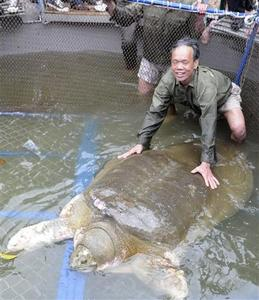 A member of the rescue team poses next to a giant freshwater turtle after it was successfully captured in Hanoi's Hoan Kiem lake April 3, 2011. REUTERS/Hoang Long/Dai Doan Ket Newspaper