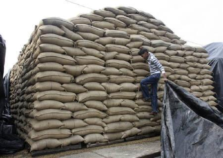 A labourer pulls a plastic sheet to cover sacks of paddy from rain at a grain market in Chandigarh January 13, 2010. REUTERS/Ajay Verma/Files