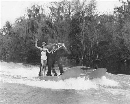 Queenie, an Asian elephant, and Liz Dane water-ski at a park in Florida in 1958. Dane's parents once owned the elephant, who was euthanized Monday at age 58.