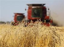<p>The last stands of wheat remain before being harvested by the Sawyer family near Acme, Alberta, September 23, 2009. REUTERS/Todd Korol</p>