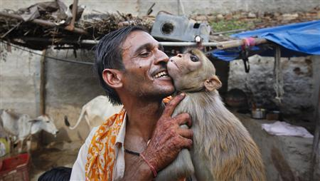 Rajesh, a 38-year-old auto rickshaw driver, plays with his monkey Raju in his house at Banetha village, located in the northwestern state of Rajasthan, July 4, 2011. Indian forest department officials unsuccessfully tried to a stop a unique simian wedding citing it violated the 1972 Wildlife Protection Act. REUTERS/Danish Siddiqui