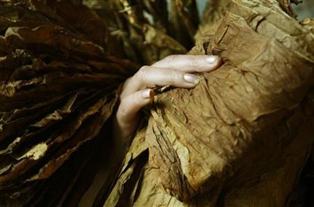A woman separates dark tobacco leaves in Navarrenx southwestern France, May 5, 2008. REUTERS/Regis Duvignau