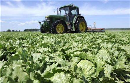 Lettuces are destroyed by a tractor in a field near Hamburg June 1, 2011. REUTERS/Fabian Bimmer