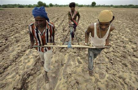 Farmers plough a field before sowing cotton seeds in Kayla village, about 70 km (43 miles) west of of Ahmedabad July 21, 2011. REUTERS/Amit Dave/Files
